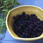 Blackberry Hill