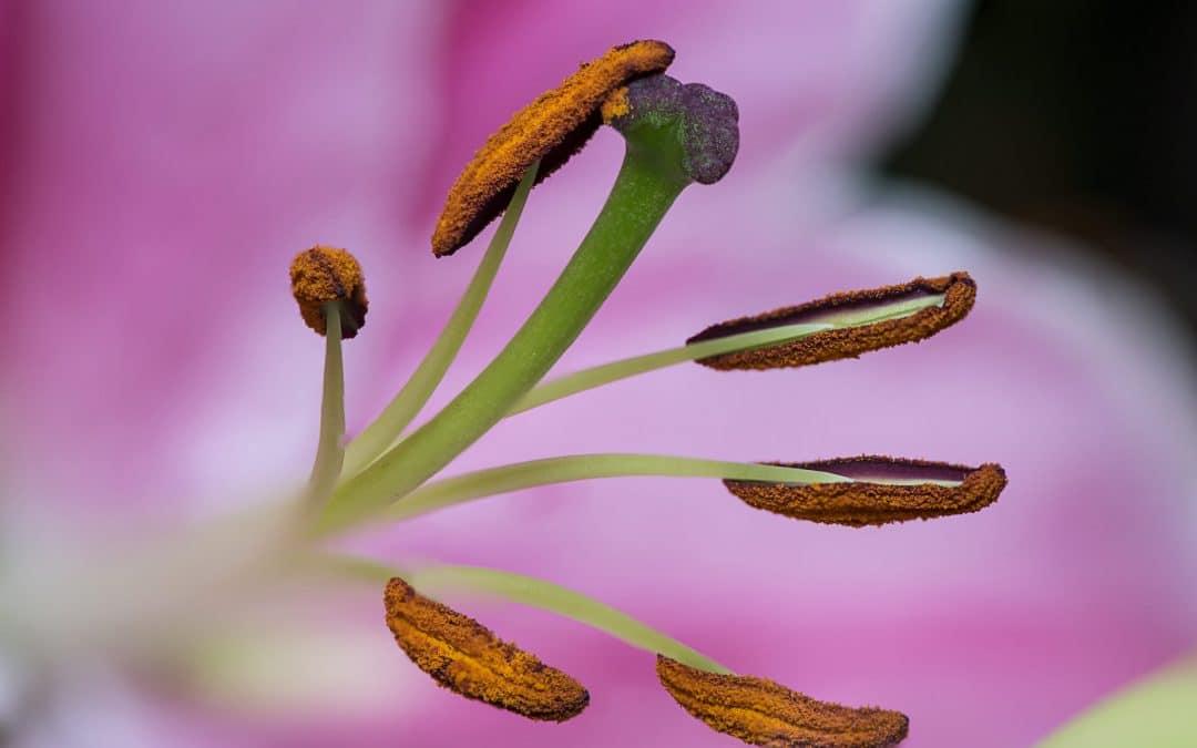 The Seasonal Allergy-Food Connection